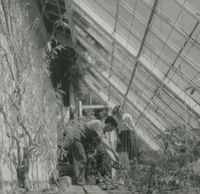 Photograph of Barbara Taft and a gardener in a green house.