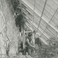 Photograph of Barbara Taft and a gardener in a green house, at the American Ambassador's Residency.
