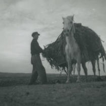 Photograph of Peter 'Phatch' Faherty loading seaweed onto his pony.