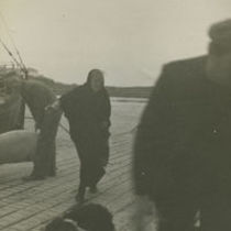 Photograph of men getting ready to load a pig onto the Dun Aengus steamer, Aran Islands