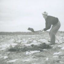 Photograph of Peter 'Phatch' Faherty manuring the ground.