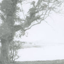 Photograph as seen from Inch Abbey across the Quoile.