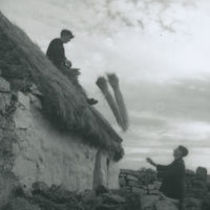 Photograph of a man throwing rye grass onto a roof for thatching.