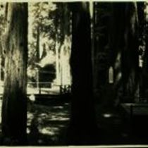 Photograph of picnic area in the San Mateo County Recreation Park