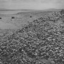 The Limpet Shell Mound (Kitchen Midden), Dogs' Bay