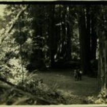 Photograph of three men in the San Mateo County Recreation Park